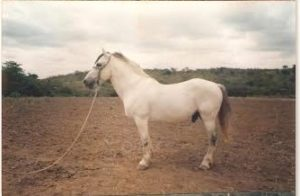 Beltrão